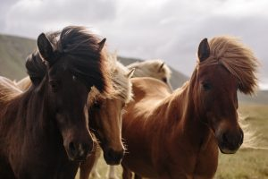 Equine Holiday: Trying Horseback Riding on Your Vacation