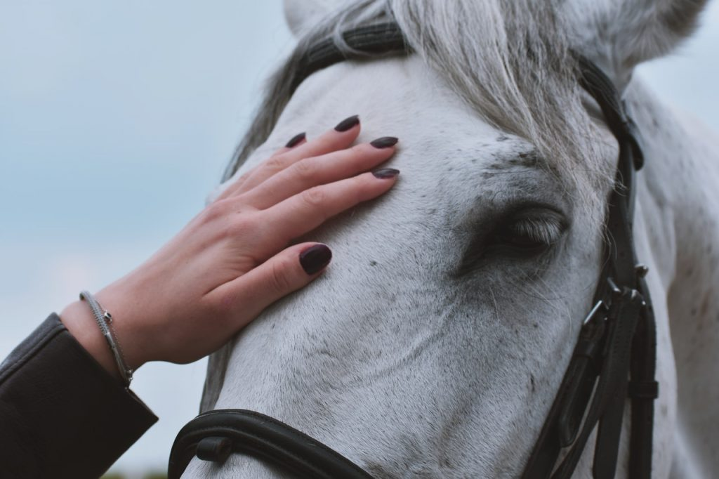 person touching a horse's head