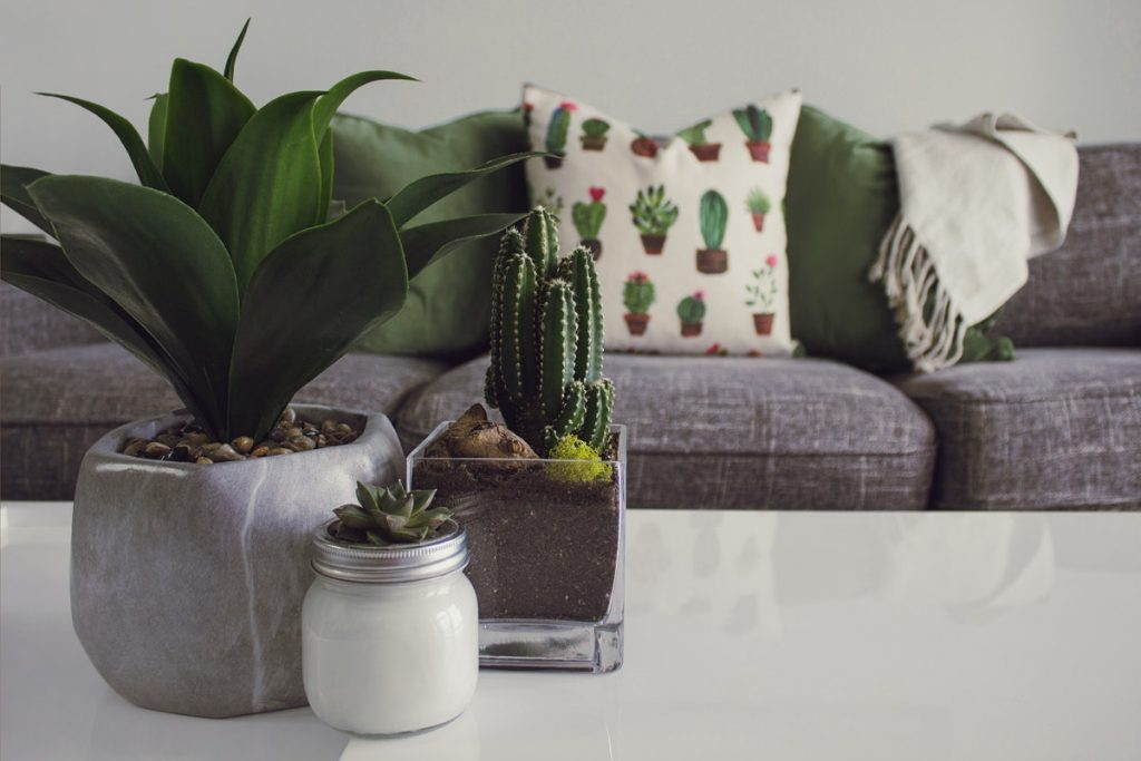 plants living room coffee table